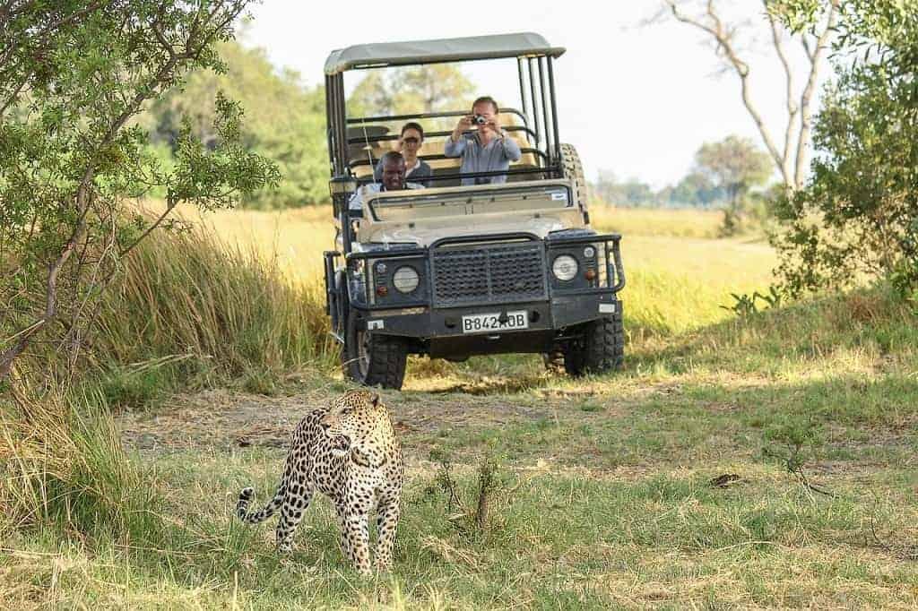 Vacation in the Delta, Chobe, and Zambia