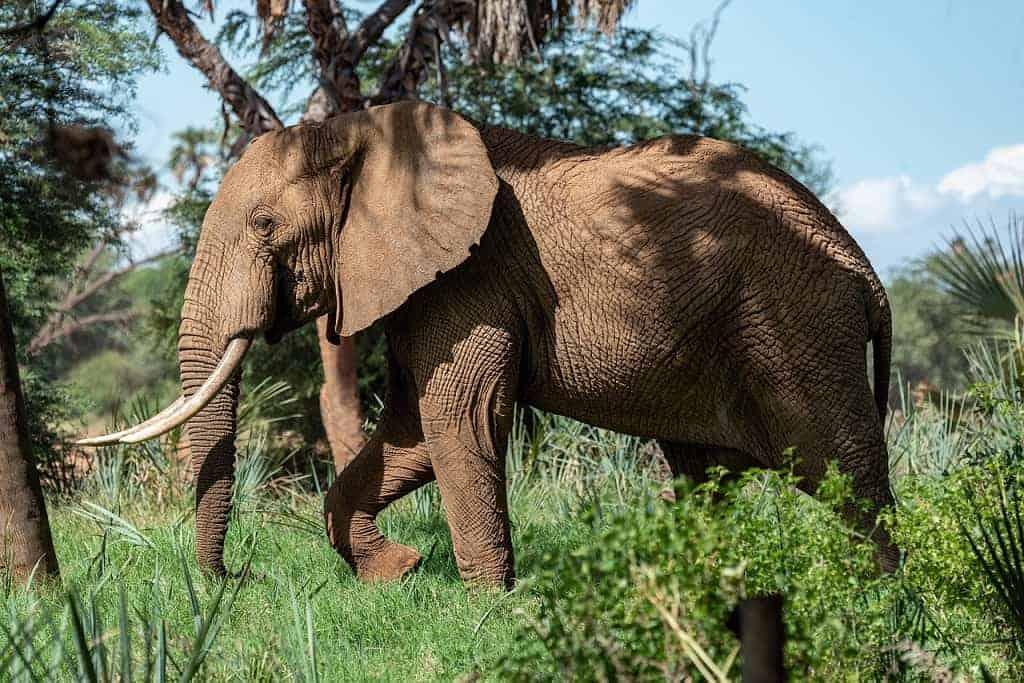 Is Kenya Or South Africa Better Safari?