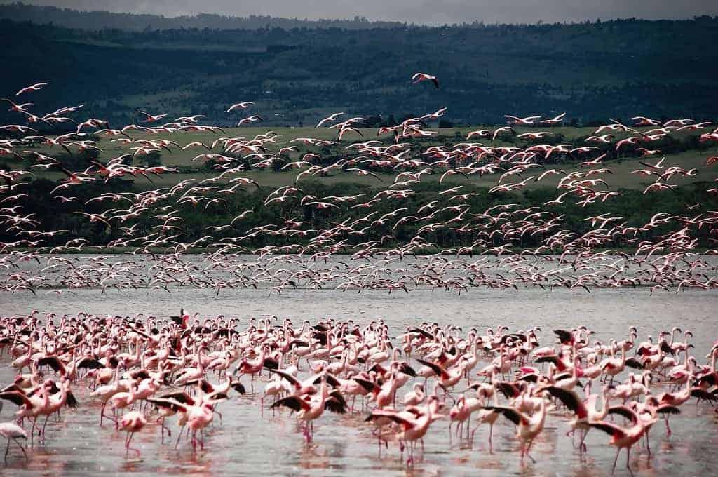 Is safari better in Kenya or Tanzania?