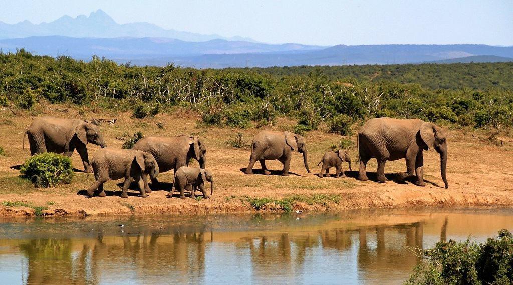 Best African Safaris For Honeymoon