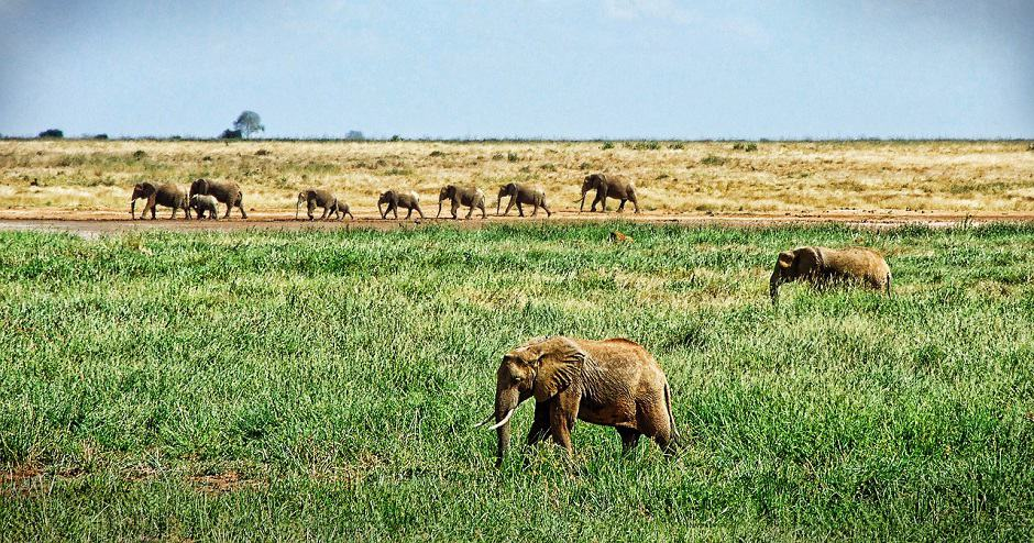 When Is the Best Time to Visit East Africa?